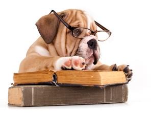 Bulldog reading